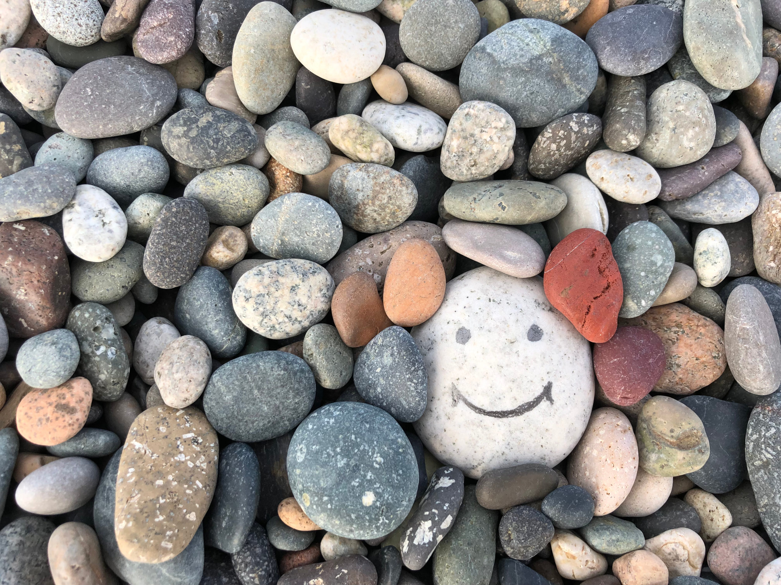 COVID 19: Why should we remain optimistic?